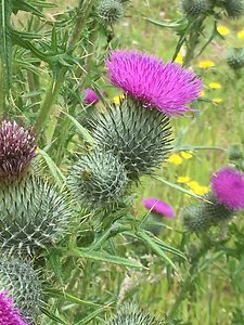 Home. Thistle 3